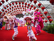 26 JANUARY 2017 - BANGKOK, THAILAND:  Lion dancers perform during Chinese New Year, also called Tet, celebrations at Emporium, a high end shopping mall in Bangkok. 2017 is the Year of the Rooster in the Chinese zodiac. This year's Lunar New Year festivities in Bangkok were toned down because many people are still mourning the death Bhumibol Adulyadej, the Late King of Thailand, who died on Oct 13, 2016. Chinese New Year is widely celebrated in Thailand, because ethnic Chinese are about 15% of the Thai population.      PHOTO BY JACK KURTZ