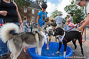 """""""The Dogs of DoG Street event"""" at Colonial Williamsburg."""