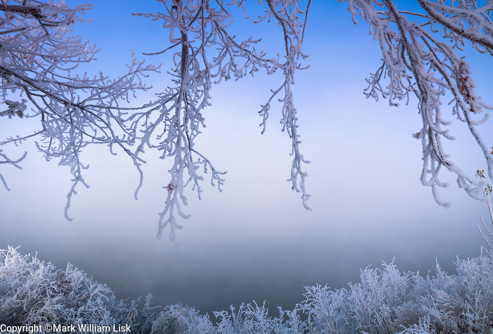 Frost in the Trees along the Snake River on the Idaho Oregon border.