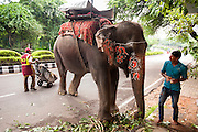 6th September 2014, New Delhi, India. An elephant handler assesses his work of decorating his elephant for an Indian wedding as a street sweeper walks by, at New Rajinder Nagar, New Delhi, India on the 6th September 2014<br />