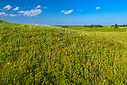 Vegetation along the dunes at Covehead<br />