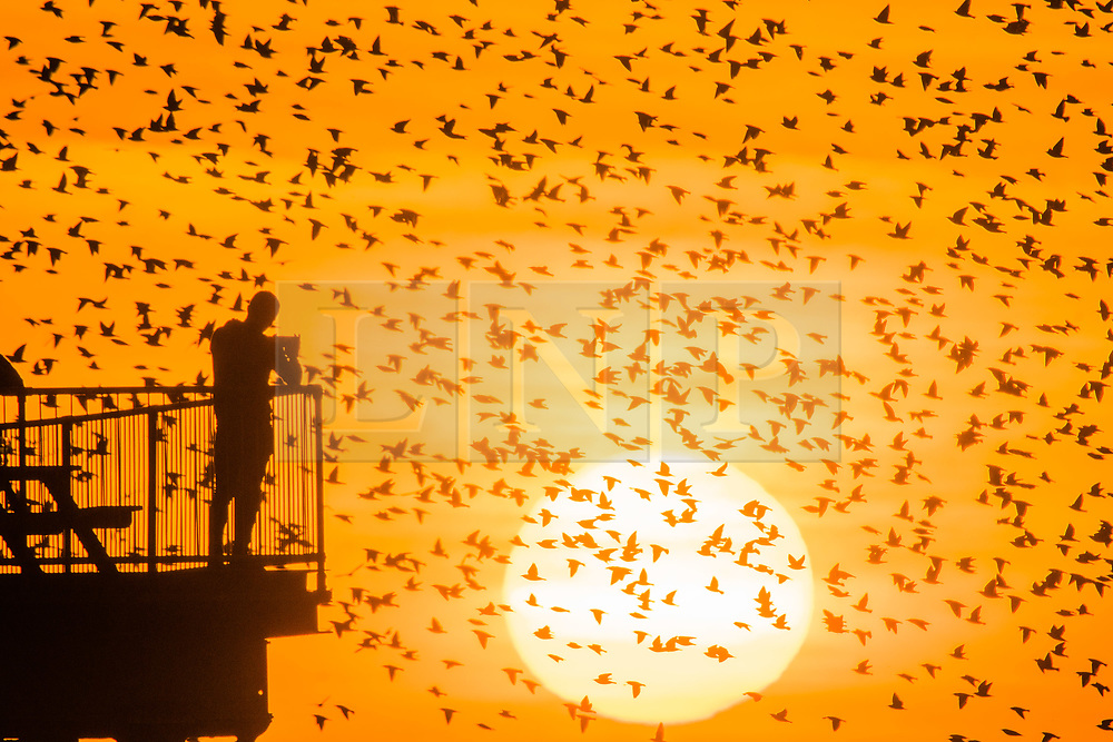 © Licensed to London News Pictures. 21/02/2019. Aberystwyth, UK. As the sun  sets dramatically in the west at the end of a glorious day of warm weather, people line the pier in  Aberystwyth Wales to watch the tens of thousands of starlings swooping to roost for the night on the forest  of cast iron legs underneath Aberystwyth's Victorian seaside pier. Photo credit: Keith Morris/LNP