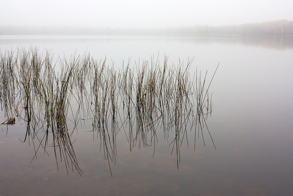 Rainy autumn day on a lake with reeds.