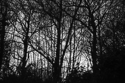 Trees, Whydown, East Sussex. 31 March 2017