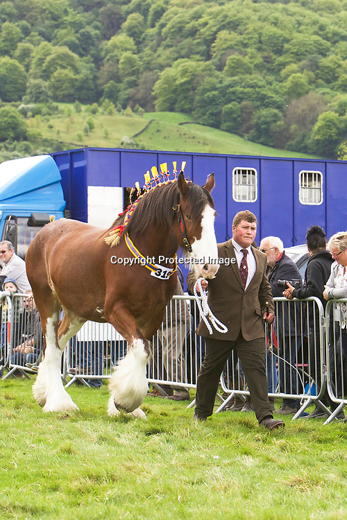 Miss L Parr's VALLIANTS JESTER<br /> Sire   Moorfield Theo<br /> Four year old and upwards Gelding or Mare