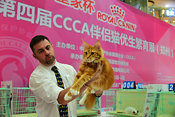 July 2, 2017 - Zhengzh, Zhengzh, China - Zhengzhou, CHINA-July 2 2017: (EDITORIAL USE ONLY. CHINA OUT)..The 4th China Care of Cat Association (CCCA) expo is held at Wanda Plaza in Zhengzhou, central China's Henan Province. (Credit Image: © SIPA Asia via ZUMA Wire)