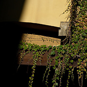 Italy, Veneto, Venice. November/12/2007...Vine plants growing down the side of a building, in Venice, Italy...