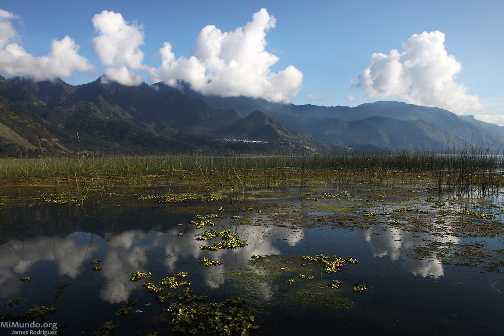 View of Tule reed marshes in Lake Atitlan. Tule (Schoenoplectus acutus) is considered a sacred plant for the local Tz'utujil Mayan population of San Juan la Laguna who organize to protect it. San Juan la Laguna, Solola, Guatemala. November 4, 2010.
