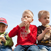 Three boys 4-6 years one looking at camera in jeans and t-shirts sitting on hay bale holding White Rock chicks