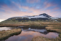 Swans at sunrise, on a small pond beneath Krossnesfjall mountain at Strandir, Northwest Iceland.