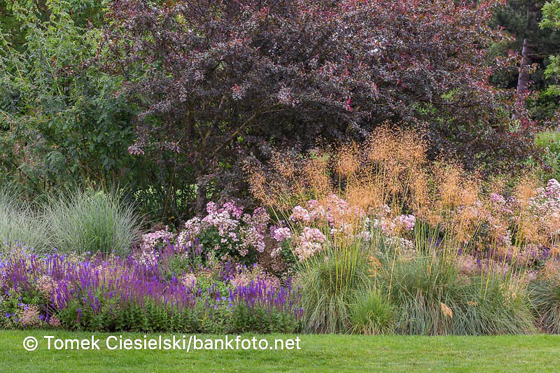 Long summer flowerbed with mix of perrenials and ornamental grasses