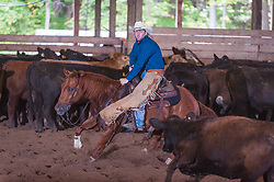 September 23, 2017 - Minshall Farm Cutting 5, held at Minshall Farms, Hillsburgh Ontario. The event was put on by the Ontario Cutting Horse Association. Riding in the Non-Pro Class is John Martin on Ray Too Smart owned by the rider.
