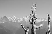 Sicht auf Eiger Mönch und Jungfrau von der Niederhorn
