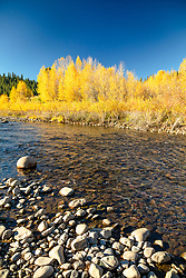 """Little Truckee River in Autumn 5"" - Autumn photograph of yellow cottonwood trees along the Little Truckee River near Stampede Reservoir."