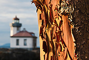 Lime Kiln Point State Park, San Juan Island, Washington, USA. Lime Kiln Lighthouse first shone in 1914, the last major light established in Washington. The name derived from lime kilns built nearby in the 1860s. The Coast Guard automated Lime Kiln Lighthouse in 1962 to turn on at dusk and off during day. Sitting on rocky shoreline at a height of 55 feet on Haro Strait, the beacon is visible for 17 miles. Red bark of the Pacific Madrone or Madrona (Arbutus menziesii) peals to reveal a new orange layer.