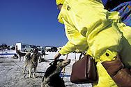 DEU, Germany,  dog sled race in Winterberg, Sauerland, woman with Siberian Huskies.....DEU, Deutschland, Schlittenhunderennen in Winterberg, Sauerland, Frau mit Sibirischen Huskies.........