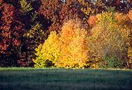 Bright side-light on an autumn wood's edge.