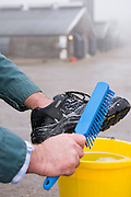 A farmer scrubs steel cap boots with disinfectant in a bucket using a brush before entering a farm for hygene and environmental health reasons.