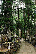 Towering cedar forest at the Okuno-in cemetary.