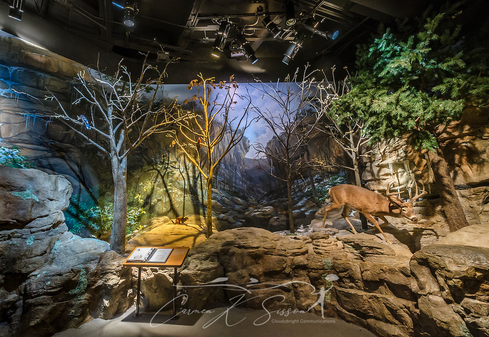 "A deer is displayed in the ""A Walk Through Time in Georgia"" Ridge and Valley exhibit at Fernbank Museum of Natural History, May 23, 2014, in Atlanta, Georgia. The museum opened in 1992 and is known for its massive dinosaur exhibitions. The museum also has an IMAX theater and holds popular public events like monthly salsa dance nights and the weekly ""Martinis & IMAX"" program. (Photo by Carmen K. Sisson/Cloudybright)"