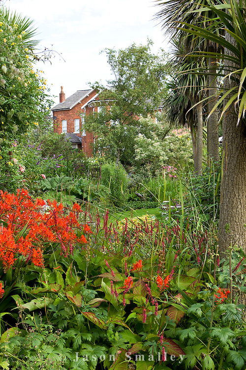 Crocosmia lucifer and Cordyline in a large garden