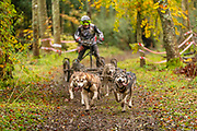 Competitor in 6 dog class during the WSA Dryland World Championship 2019 at Firle Country Estate in the South Downs National Park, Lewes, Sussex, United Kingdom on 17 November 2019.