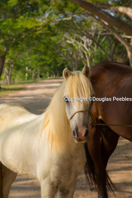 Hotelito Desconocido Sanctuary Reserve & Spa, Costalegre, Jalisco, Mexico, horse