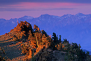 First light on Bristlecone Pines and Sierra from the Ancient Bristlecone Pine Forest, White Mountains, CALIFORNIA