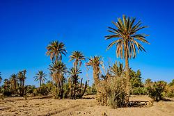 An oasis near Skoura in southern Morocco<br /> <br /> (c) Andrew Wilson | Edinburgh Elite media
