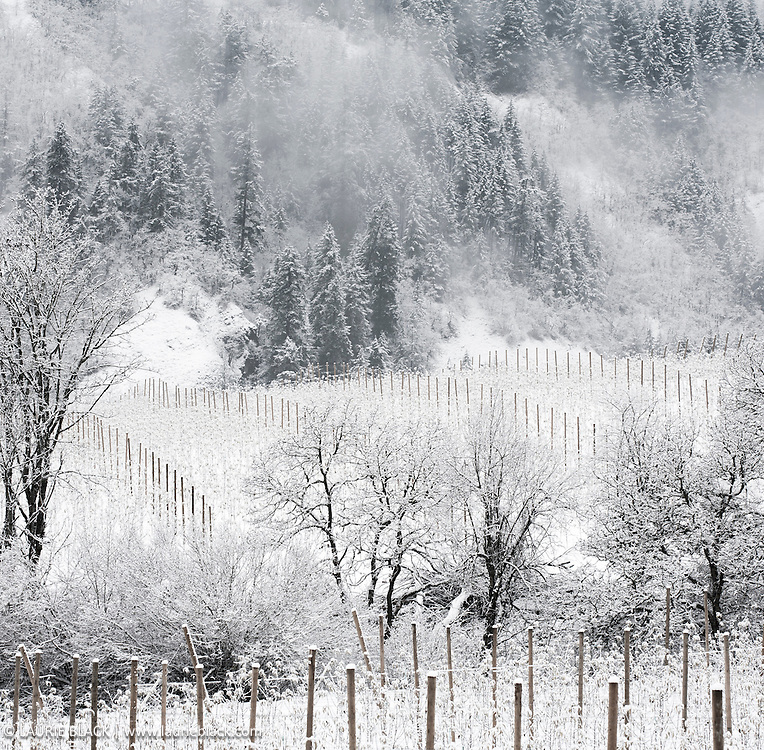 Northwest orchard winter landscape