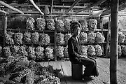 Woman farmer and her traditional farm house made of bamboo. Storing a crop of garlic.