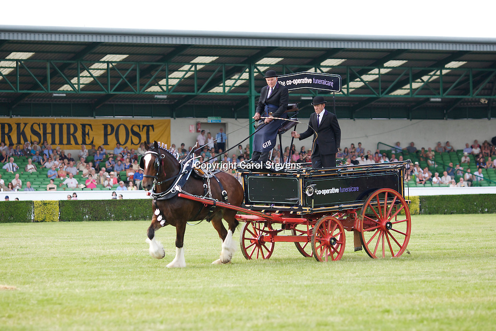 Gawin Holmes driving John B, bay gelding Shire - The Co-operative Funeralcare Shire Horse Team North-East