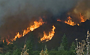 Greeley Hill, California-- July 29, 2008-Telegraph Fire-Wildfires Threaten Yosemite National Park .Fire blows up near Halls Gulch and  Bull Creek Road. This fire is out of control and will have to be caught on the next fire break..This Image was use by Associated Press Photo'.AP Photo/Al Golub.