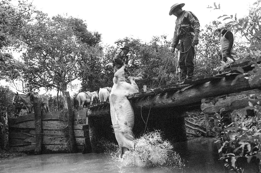 Pantanal Cowboys:  while crossing a bridge in the rain, a horse slips and gets stuck.  The cowboys use an axe to cut away the bridge's wooden planks.