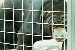 10 June 2001: Miller Park Zoo<br /> sun bear<br /> Archive slide, negative and print scans.