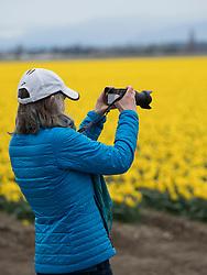United States, Washington, Mt. Vernon.  Skagit Valley Tulip Festival, held annual in April.