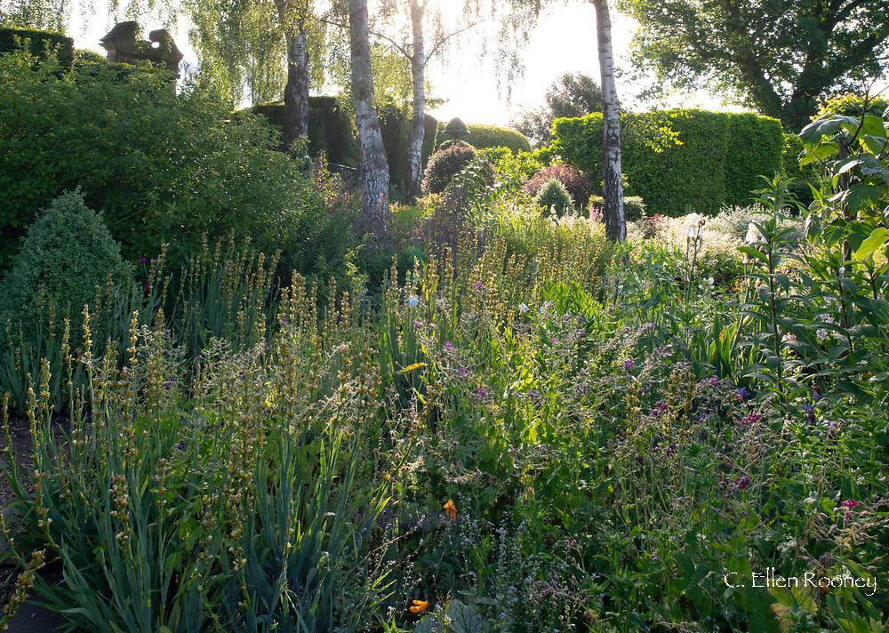 Naturalistic planting in the Serpentine Walk area in The Laskett Gardens, Much Birch, Herefordshire, UK