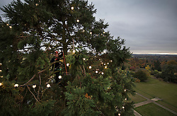 © Licensed to London News Pictures. 15/11/2016. Ardingly, UK. Tony Sweeney, Director of Wakehurst Place, climbs to the top of the tallest Christmas tree in the UK. Every year for the last 24 years teams of arboriculturists climb the 110 ft [33 metres] redwood to string up the 1800 LED Christmas lights.  The giant tree can be seen for miles around and acts as an unofficial beacon to pilots landing at nearby Gatwick airport over the festive period.  Photo credit: Peter Macdiarmid/LNP