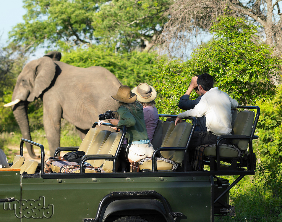 Group of tourists on safari watching elephant