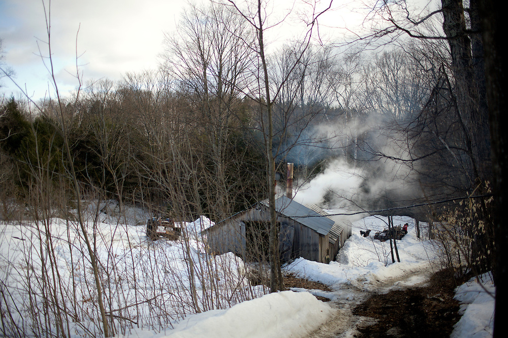 Steam rises from a Tunbridge, Vt., sugarhouse as sap is boiled to make maple syrup in on April 6, 2008. (Photo by Geoff Hansen)