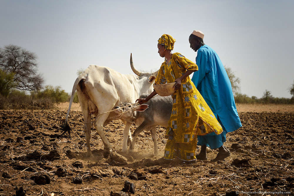 Milchproduktion auf einem Bauernhof in THIARGNY, Senegal.