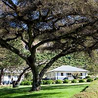Hamlin College of Midwifery, Desta Mender