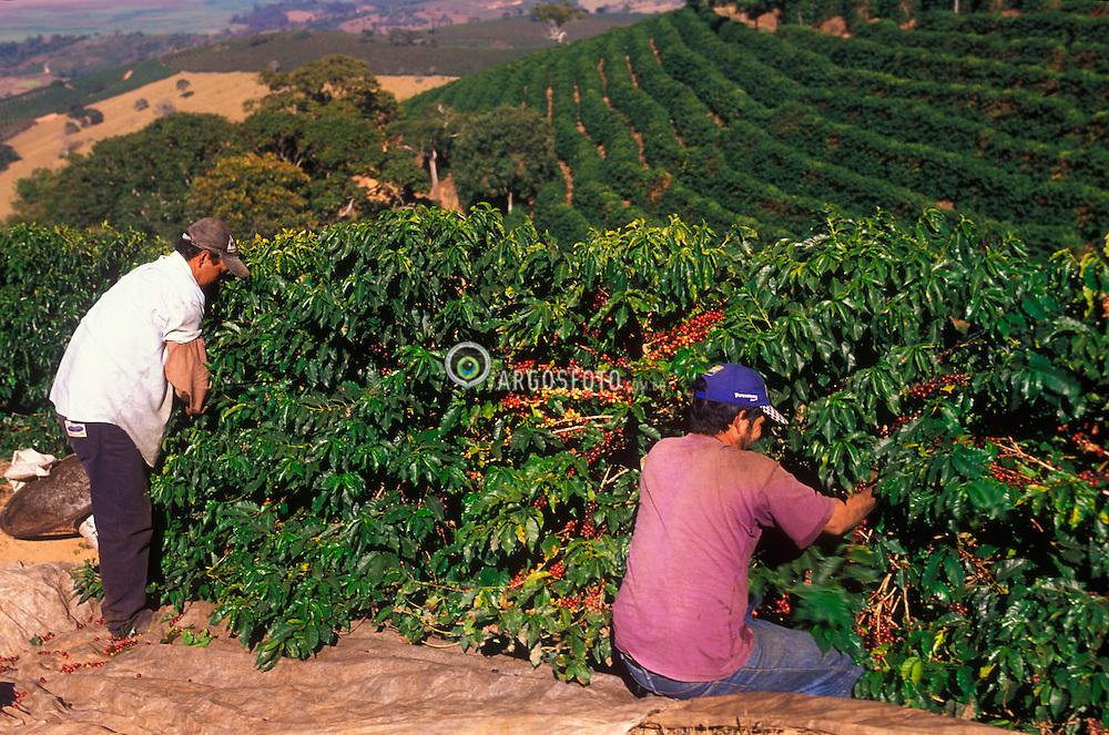 Areado, Minas Gerais, Brasil. 07/2002. .Lavoura de cafe, Catuai Vermelho./  Worker in a coffee farm..Foto © Marcos Issa/Argosfoto