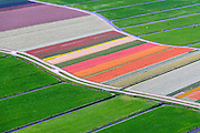 Nederland, Zuid-Holland, Gemeente Teylingen, 09-04-2014; Bloembollenvelden op geestgrond temidden van de weilanden in de Polder Elsgeest vormen een abstract bloementapijt.<br /> Bulb fields in the middle of the meadows in the polder form an abstract floral border like a rag rug.<br /> luchtfoto (toeslag op standard tarieven)<br /> aerial photo (additional fee required)<br /> copyright foto/photo Siebe Swart