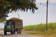 Transporting sugarcane during harvesting in the Fall at plantation along the Mississippi at Baldwin, Louisiana, USA