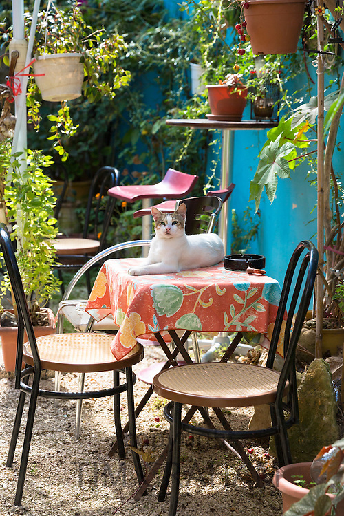 Brown and white cat on table in patio garden of house in village of Peroulades, Northern Corfu, , Greece