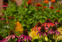 Meredith Public Library flower gardens.  (Karen Bobotas/for the Laconia Daily Sun)