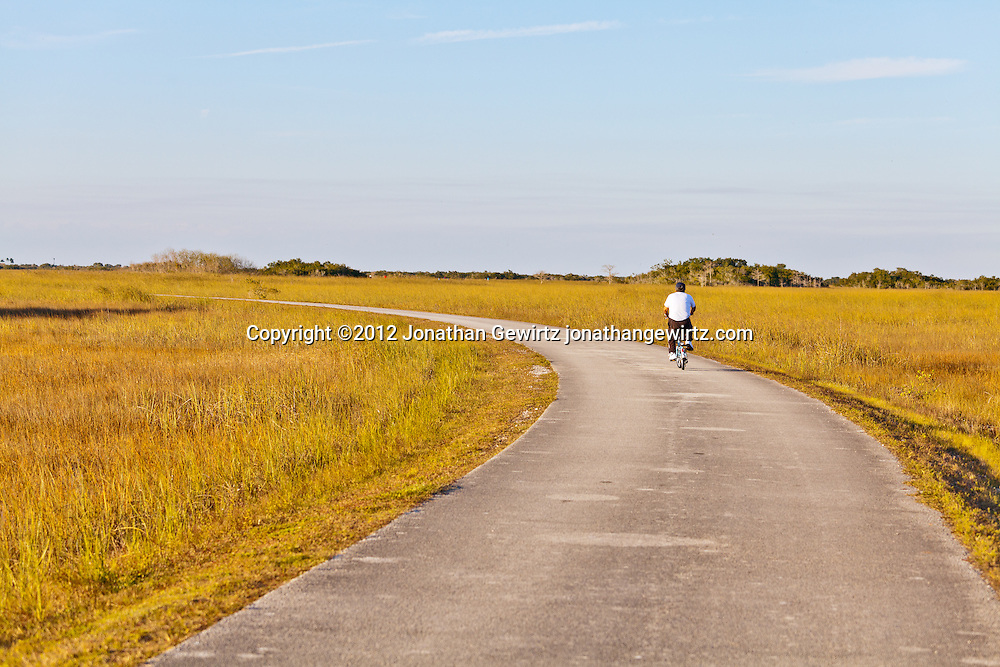 A visitor to the Shark Valley section of Everglades National Park, Florida bicycles on a paved path through the sawgrass prairie. WATERMARKS WILL NOT APPEAR ON PRINTS OR LICENSED IMAGES.