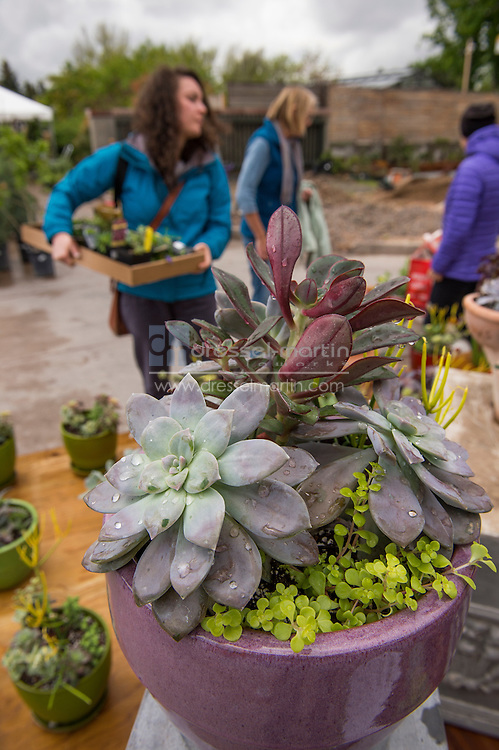 plant sale friday and saturday