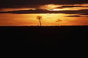 African wildlife, Kenya, Maasai Mara National Park, wildlife conservation, wildlife in natural habitat, animals in natural environment,
